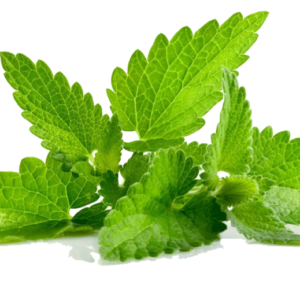 spearmint-leaf-st-maarten-agriculture-community-garden