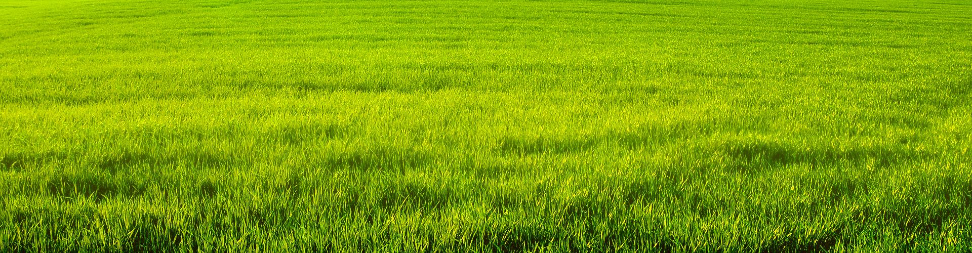 bg_grass