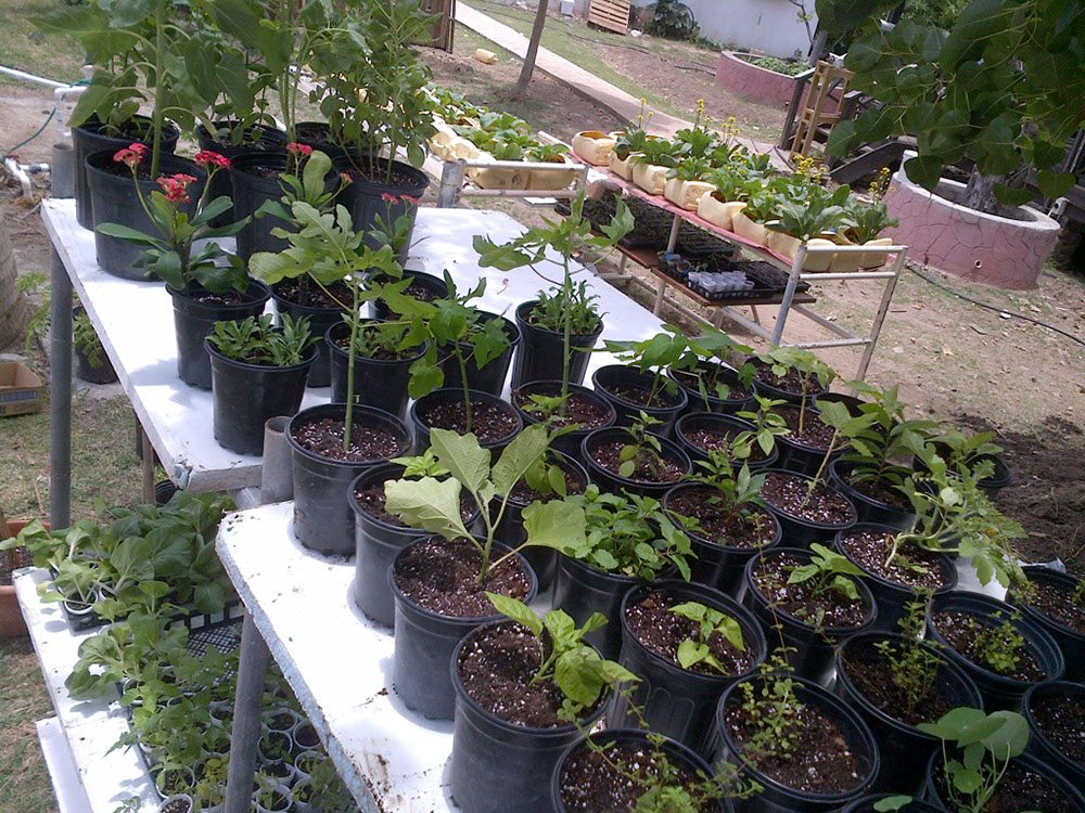 Spaceless gardens sets a display of ornamental and for Plants for sale