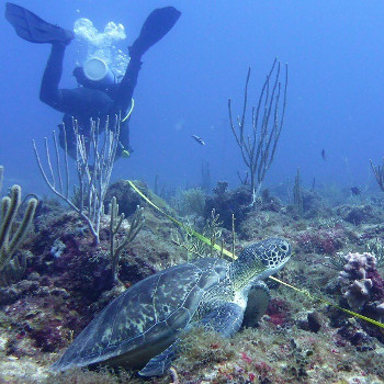 Using GCRMN Standards: SXM Nature Foundation Scientifically Assess Coral Reef Impacts Post Hurricanes Irma and Maria