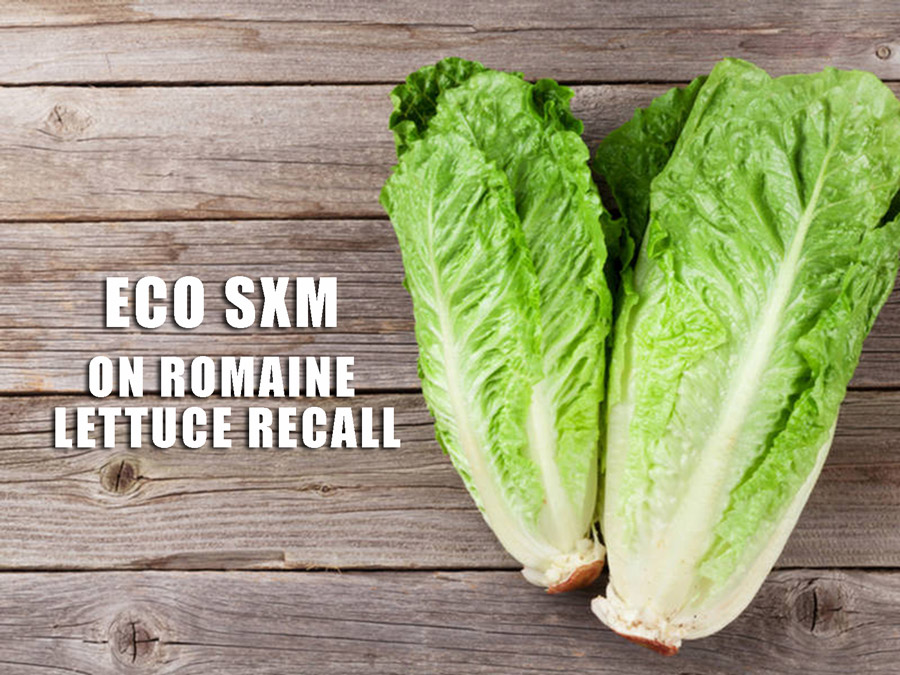 Eco Sxm On Current Romaine Lettuce Recall St Maarten Argriculture
